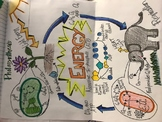 Photosynthesis/ Cellular Respiration cycle of materials doodle