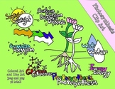 Photosynthesis Clip Art and Line Art