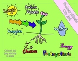 Photosynthesis Colored Clip Art