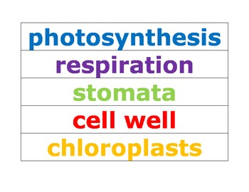 Photosynthesis Cooperative Learning Groups