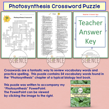 Photosynthesis Crossword Puzzle By Amy Brown Science Tpt