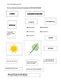 Photosynthesis Cut & Sort