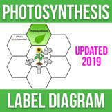 Photosynthesis Diagram Label Activity - Biology - High Quality