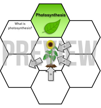 Photosynthesis diagram label activity biology high quality tpt photosynthesis diagram label activity biology high quality ccuart Gallery