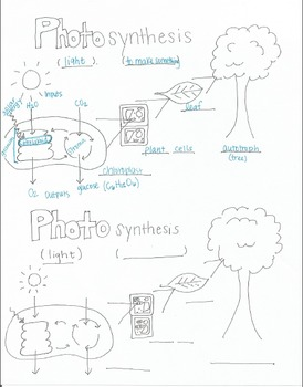 Photosynthesis Diagram (half sheet)
