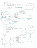 Photosynthesis Diagram (half sheet)