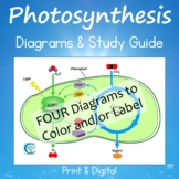 Photosynthesis Diagrams and Study Guide
