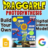 Photosynthesis - Digital Draggable Science Model