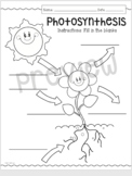 Photosynthesis Fill in the Blank
