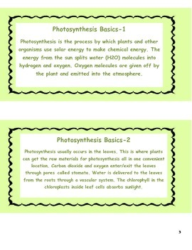 Photosynthesis Study Cards