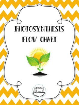 Photosynthesis Flow Chart