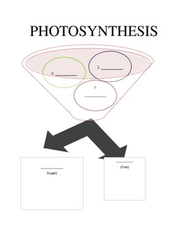 Photosynthesis Flow Chart Worksheet