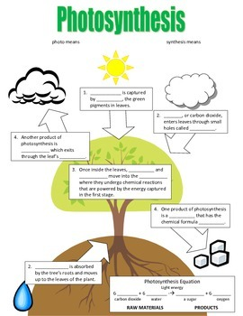 Photosynthesis Flowchart