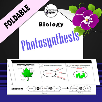 Photosynthesis Foldable - Bioenergetics Review