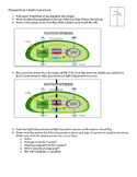 Photosynthesis Foldable Instructions - SUB PLAN