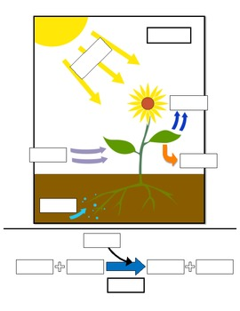 Photosynthesis Game: A Formative Assessment Activity