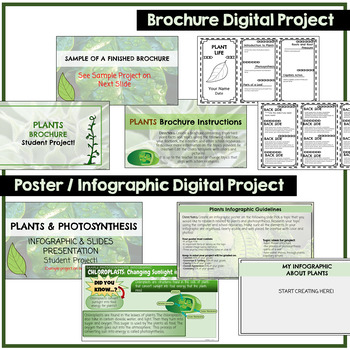 Photosynthesis Google Classroom Student Projects