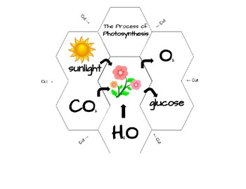 Photosynthesis Graphic Interactive Science Journal