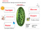 Photosynthesis Graphic Organizer