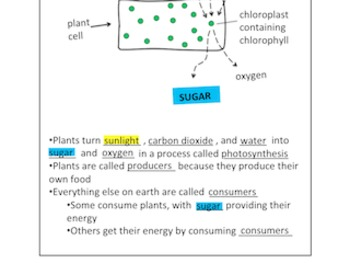 Photosynthesis Graphic Organizer: Photosynthesis-How plants make sugar
