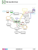 Photosynthesis Guided Notes & Quiz Pack