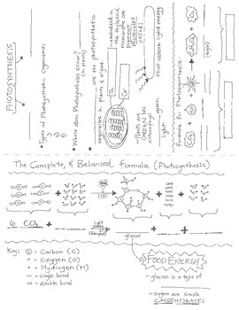 Photosynthesis Guided Notes + key