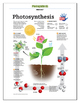Photosynthesis Handout