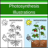 Photosynthesis Illustrations / Clip art
