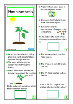 Photosynthesis  Plants Interactive Book Biology Autism Special Education