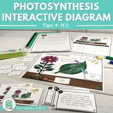 Photosynthesis Interactive Diagram (Task Cards & Assessmen