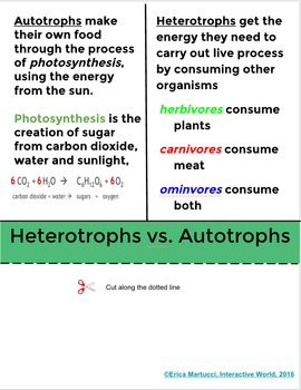 Photosynthesis Interactive Flip Book and Quiz