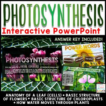 Photosynthesis PowerPoint - Interactive