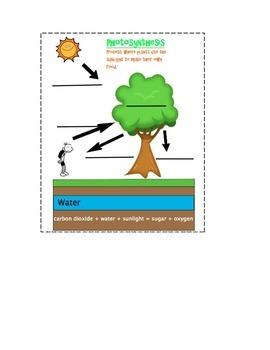 Photosynthesis Journal Insert