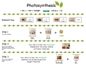 Photosynthesis K'nex Activity