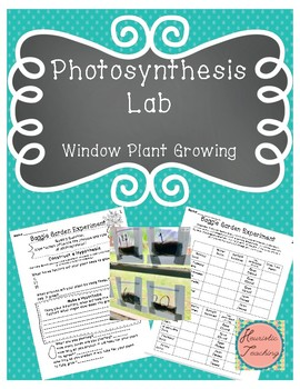 Science Experiments: Photosynthesis Lab