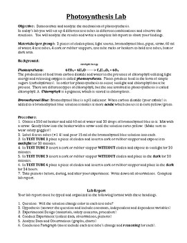 Photosynthesis Lab and Lab Report