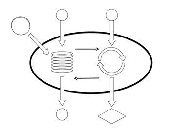 Photosynthesis Label Diagrams *Printable*