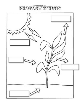 Photosynthesis Label the Diagram