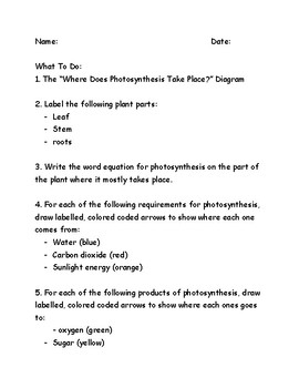 Photosynthesis Labeling Activity