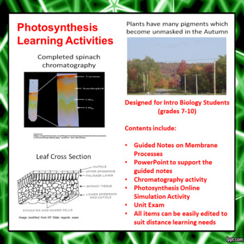 Photosynthesis Learning Activities