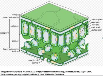 Photosynthesis Learning Package for AP/Advanced Biology