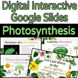 Digital Photosynthesis Lesson & Activities