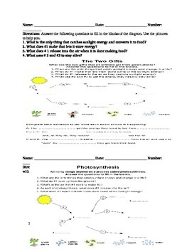 Photosynthesis Lesson Plan/ Worksheets and Rubrics