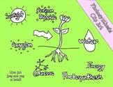 Photosynthesis Line Art