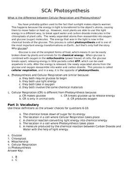 Photosynthesis Literacy Quiz