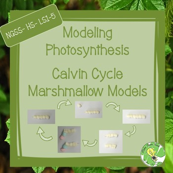 Photosynthesis Marshmallow Model- Calvin Cycle