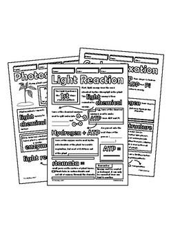 Photosynthesis Biology Bundle Doodle Notes Power Point INB