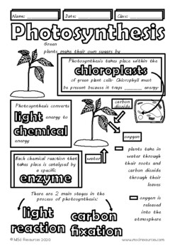 Photosynthesis Middle and High School Biology, Life Science Doodle Notes