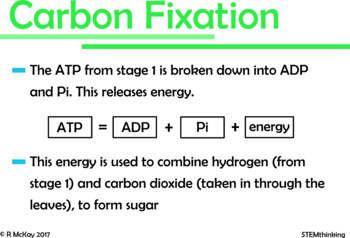Photosynthesis Middle and High School Biology Powerpoint Presentation
