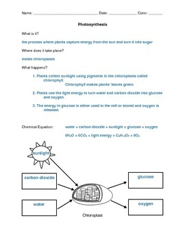 Photosynthesis Notes